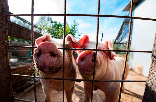 Antico Casale Farm Holiday in Positano - animals